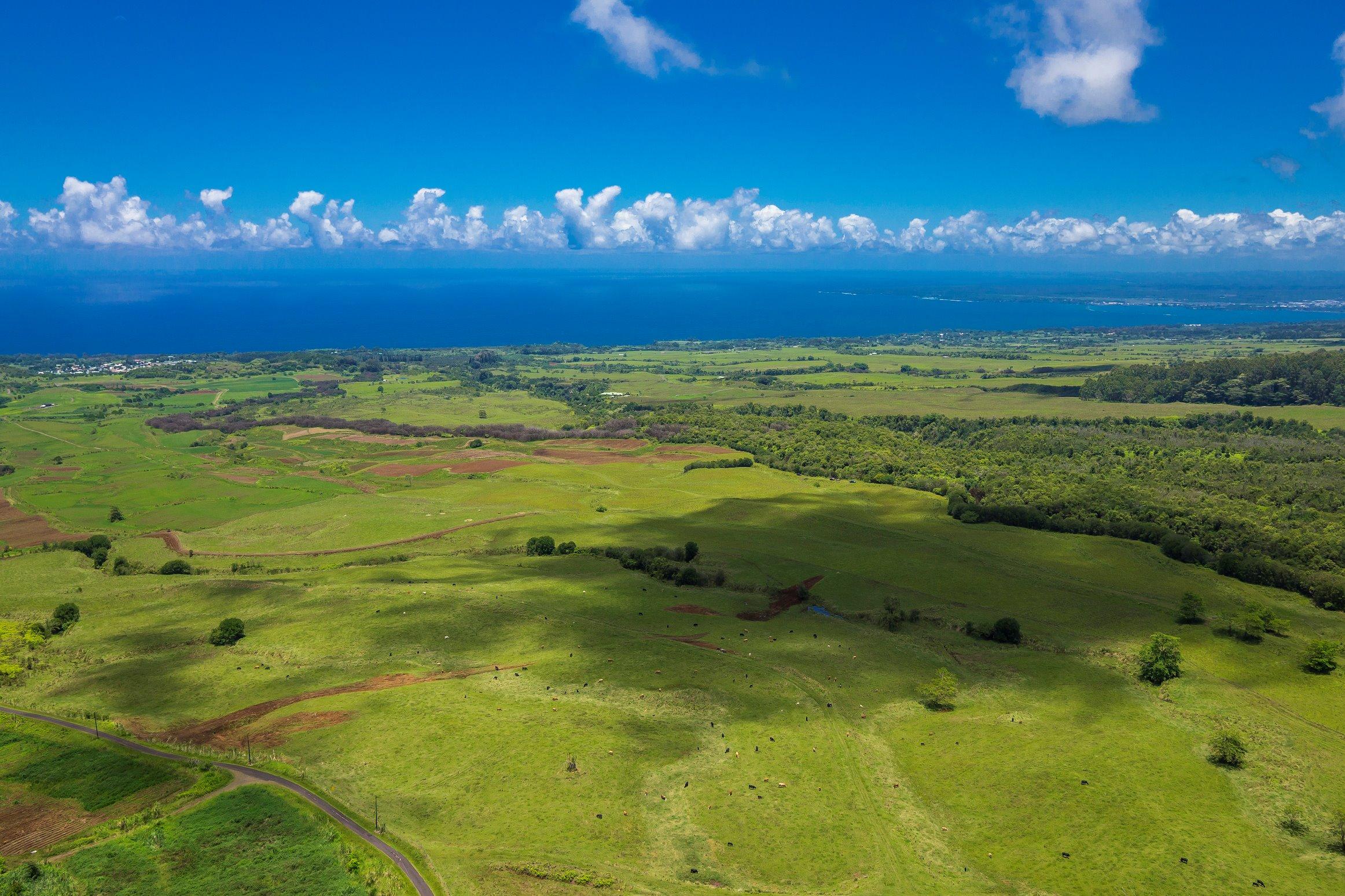 Beautiful pastureland with stunning ocean views!