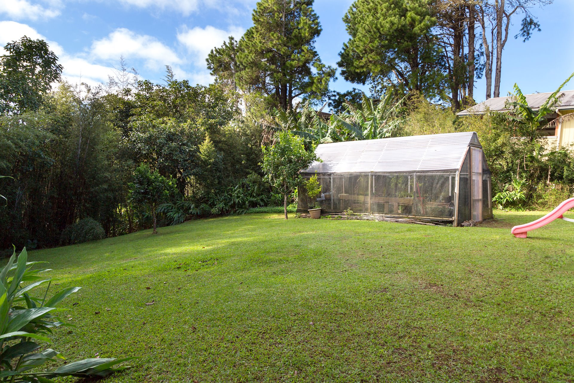 Large grassy yard with greenhouse